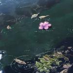 Hoa rơi hữu ý, nước chảy vô tình duyên đến duyên đi bình thản đón nhận